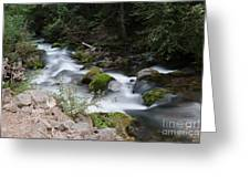 The Tananamawas Flowing Through The Forest Greeting Card