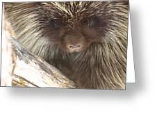 The Tender Side Of Porcupine Greeting Card