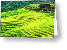 The Terraced Fields Scenery In Autumn Greeting Card
