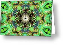 The Terrapin Star Greeting Card