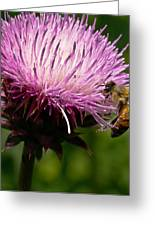 The Thistle And The Stinger Greeting Card by Ron Plasencia