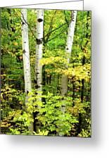 The Three Birch Greeting Card