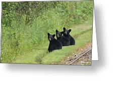 The Three Little Abc Bears Greeting Card