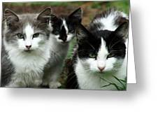 The Three Of Us Greeting Card