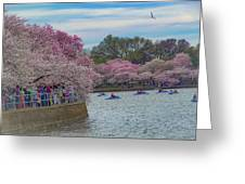 The Tidal Basin During The Washington D.c. Cherry Blossom Festival Greeting Card