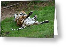 The Tiger At Play Greeting Card