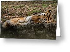 The Tiger's Rock  Greeting Card