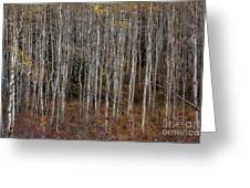 The Tight Aspens Greeting Card