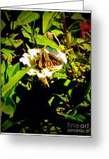 The Tiniest Skipper Butterfly In The Garden Greeting Card