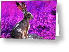 The Tortoise And The Hare . Magenta Square Greeting Card