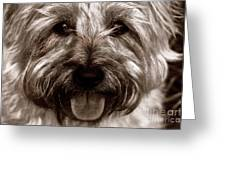 The Toto Greeting Card