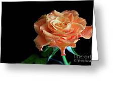 The Touch Of A Rose Greeting Card by Tracy Hall