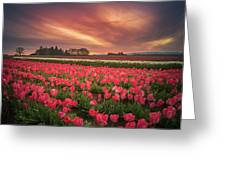 The Tranquil Morning Before Sunrise Greeting Card