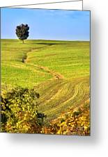 The Tree And The Furrows Greeting Card
