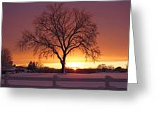 The Tree At Sunset Greeting Card