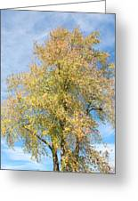 Town Tree  Greeting Card