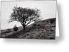 The Tree On The Fell Greeting Card