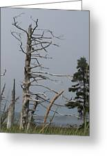 The Trees Of Grand-manan Greeting Card
