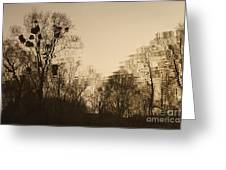 The Trees With Mistletoe. Greeting Card