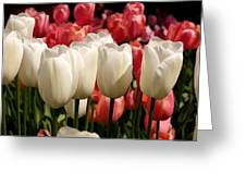 The Tulip Bloom Greeting Card