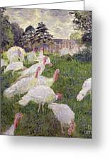 The Turkeys At The Chateau De Rottembourg Greeting Card by Claude Monet