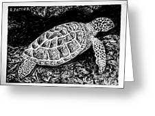 The Turtle Searches Greeting Card