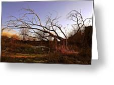The Twilight Tree Greeting Card
