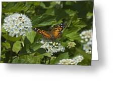 The Unnamed Butterfly Greeting Card