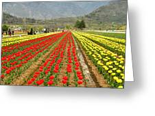 The Valley Blooms Greeting Card