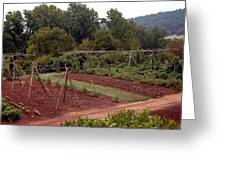 The Vegetable Garden At Monticello II Greeting Card