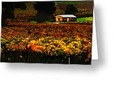 The Vines During Autumn Greeting Card