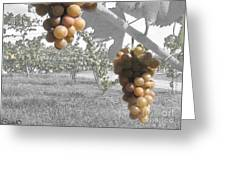 The Vineyard 2  Greeting Card
