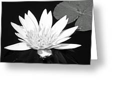 The Vintage Lily II Greeting Card