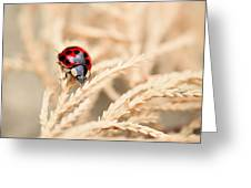The Wandering Ladybug Greeting Card
