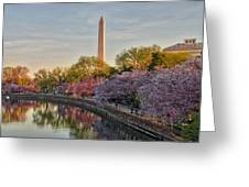 The Washington Monument And The Cherry Blossoms Greeting Card