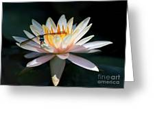 The Water Lily And The Dragonfly Greeting Card by Sabrina L Ryan