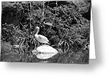 The Waterbirds Greeting Card
