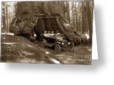 The Wawona Tree Mariposa Grove, Yosemite  Circa 1916 Greeting Card