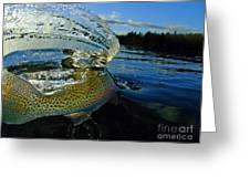 The Way Of The Trout Greeting Card