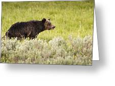 The Wet Grizzly Greeting Card