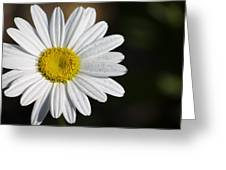 The White Daisy Greeting Card by Danielle Allard