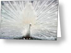 The White Peacock Greeting Card
