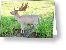The White Stag 3 Greeting Card