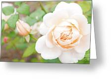 The White Washed Rose Greeting Card