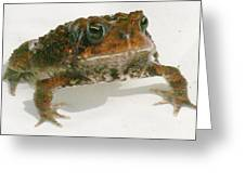 The Whole Toad Greeting Card