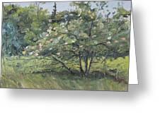 The Wild Apple Tree Greeting Card