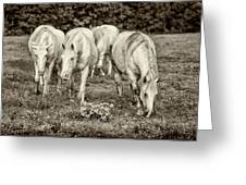 The Wild Horses Of Shannon County Mo 7r2_dsc1111_16-09-23 Greeting Card