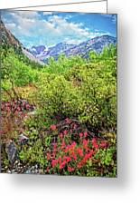 The Wildflowers Of Lundy Canyon Greeting Card