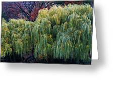 The Willows Of Central Park Greeting Card