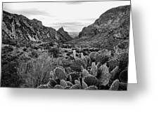 The Window 2 Black And White Greeting Card